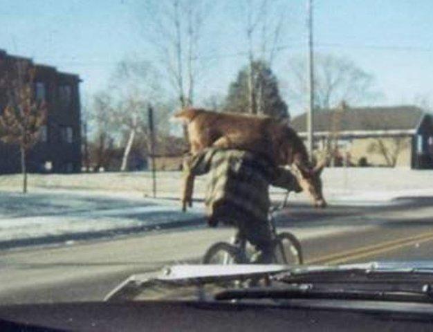 deer-biker1