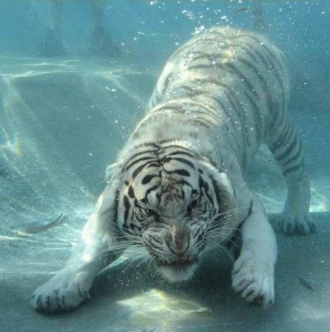 under water1