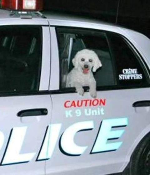 dogcop1