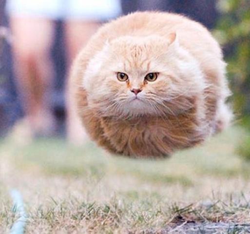 stat cat