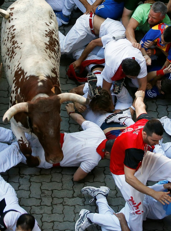 Runners fall in the path of an Alcurrucen fighting bull (L) and steers at the entrance to the bull ring during the first running of the bulls of the San Fermin festival in Pamplona July 7, 2013. Several runners suffered light injuries in a run that lasted four minutes and six seconds, according to local media. REUTERS/Susana Vera (SPAIN - Tags: SOCIETY ANIMALS) - RTX11FDV