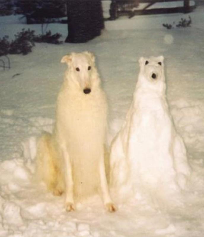 SNOW modified