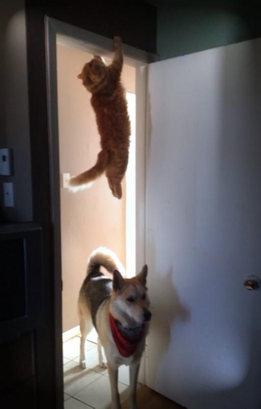 CAT HANG modified