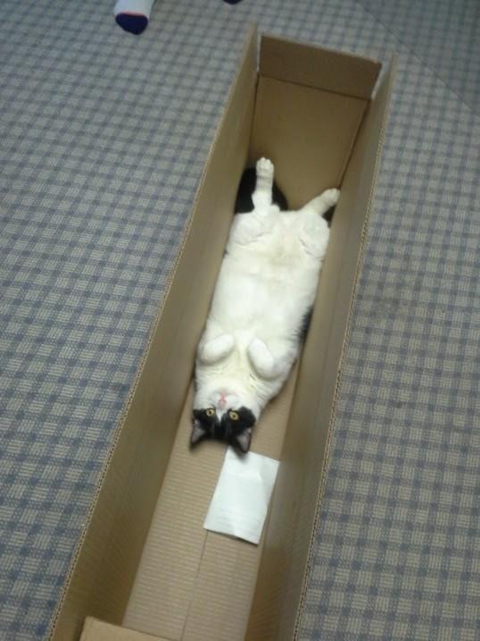 fat cat modified