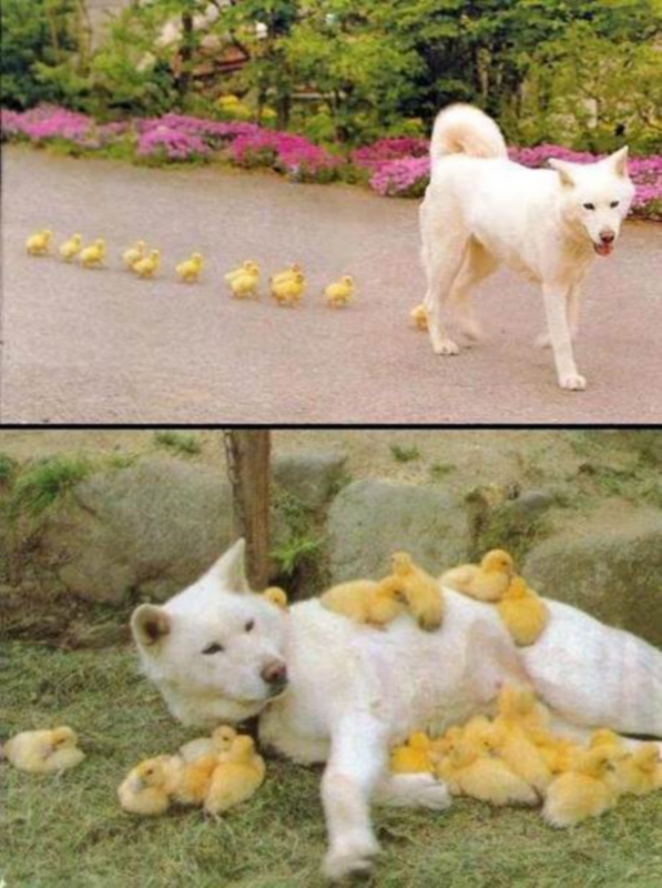 DOG DUCK modified