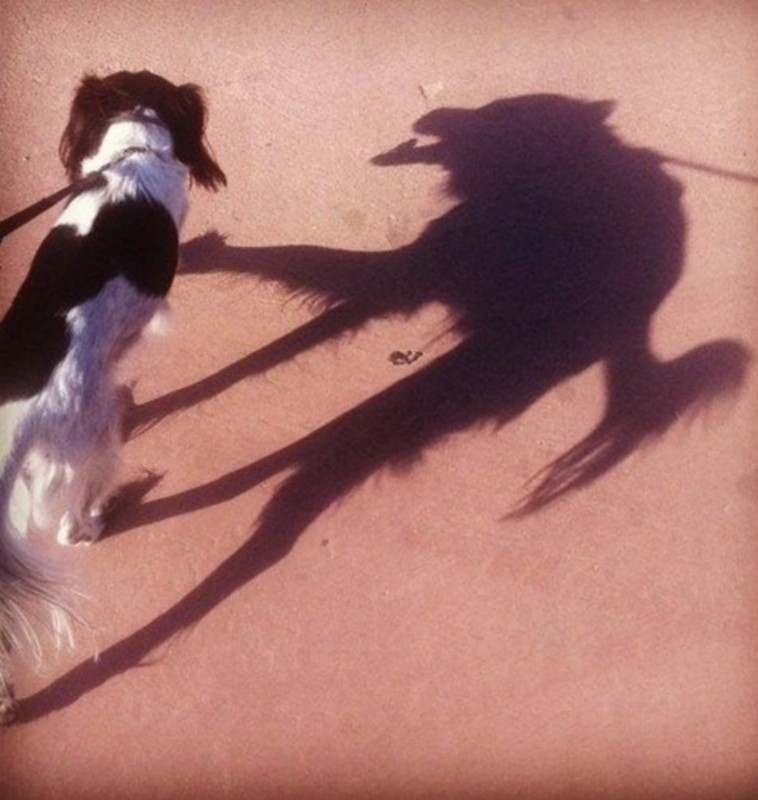 DOG SHADOW modified