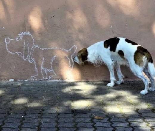 DOG modified