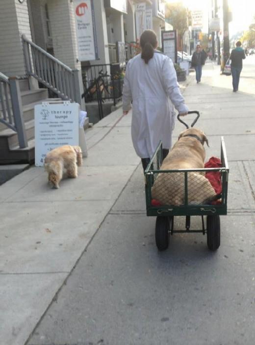 fat dog modified
