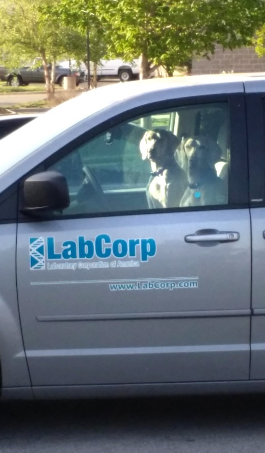 LABS modified