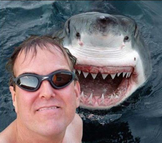 SHARK modified