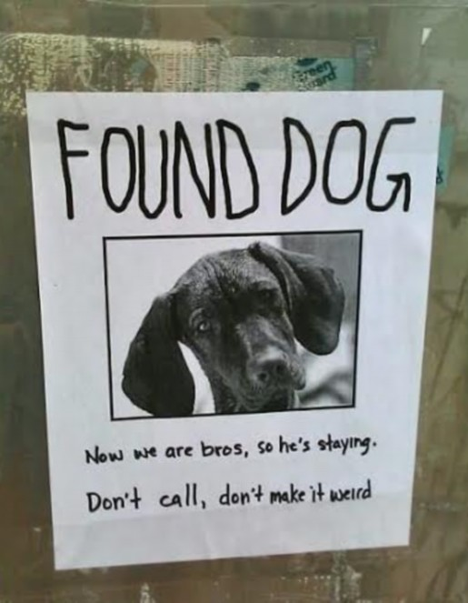 DOG FOUND modified