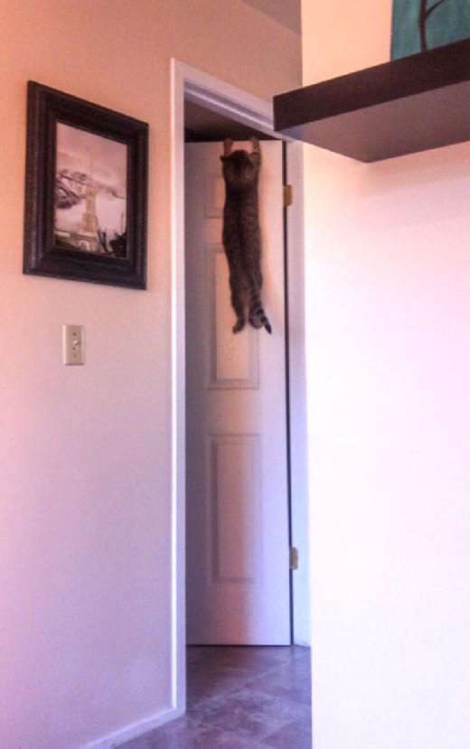 CAT modified
