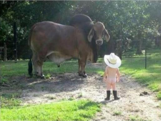 COWBOY modified