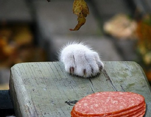 PAW modified