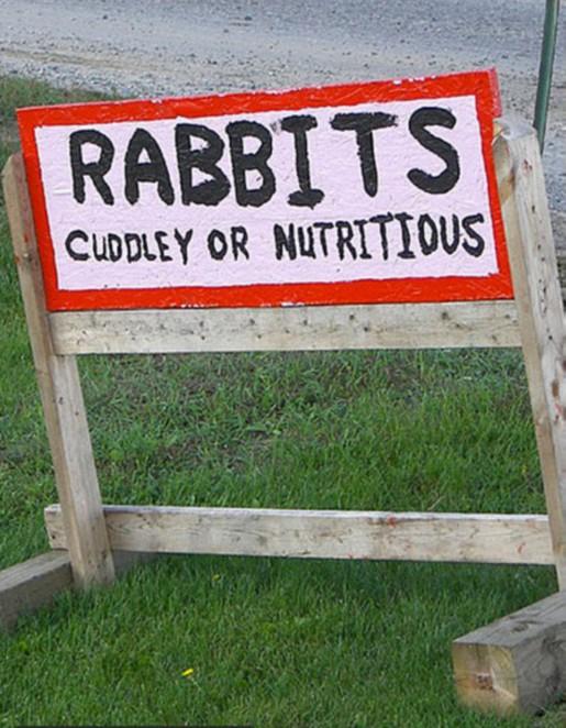 rabbit modified