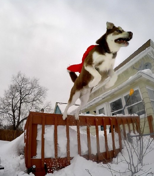 SUPERDOG modified