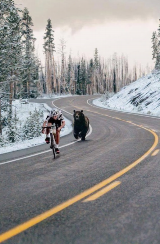 BEAR BIKE modified