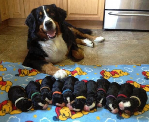 PUPPIES modified