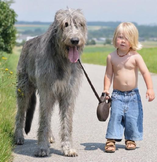 BIG DOG modified
