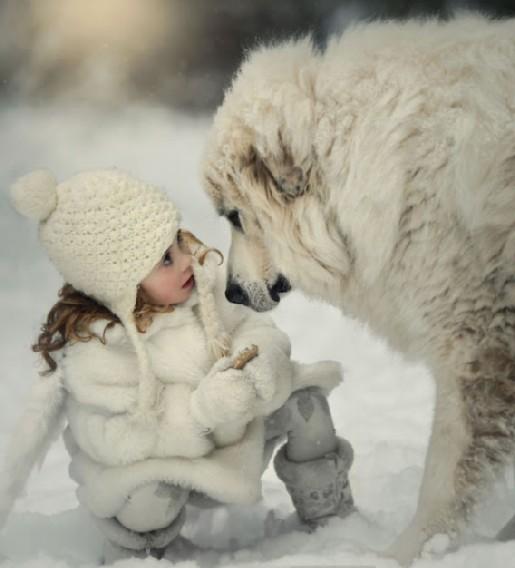 SNOW DOG modified