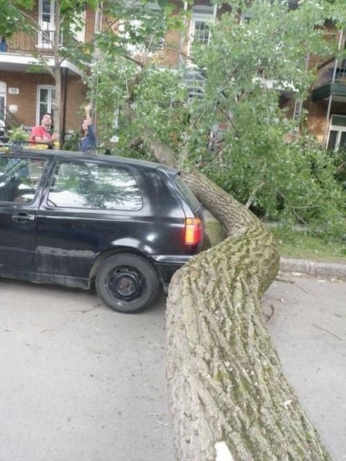 TREE modified