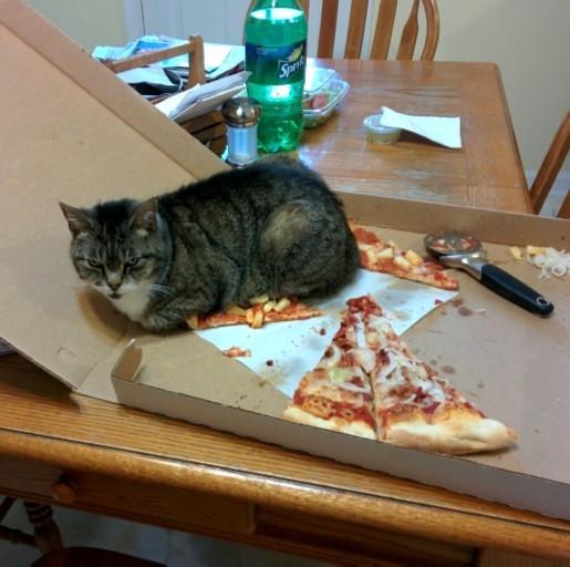 CAT PIZZA modified copy