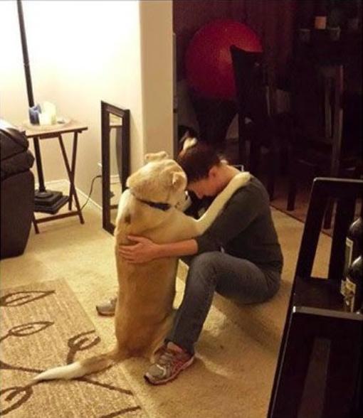 DOG HUG1