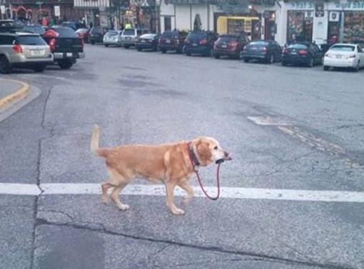 DOG WALK modified