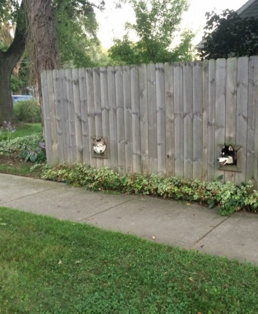 DOGFENCE modified