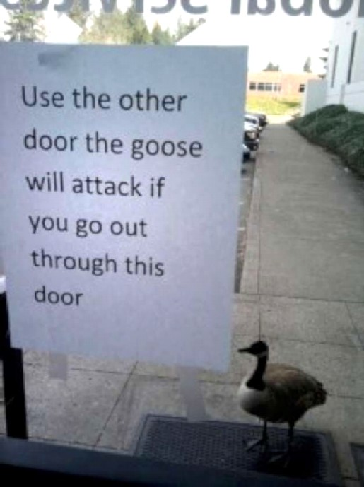 GOOSE modified