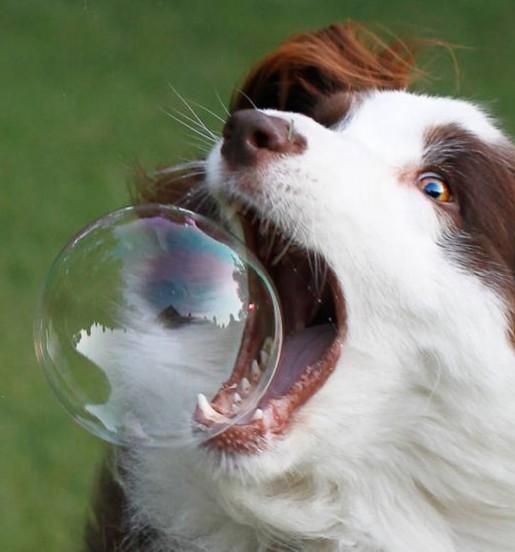 dog_bubble modified