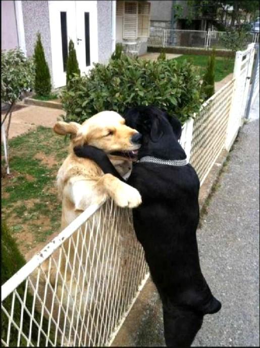 HUG modified