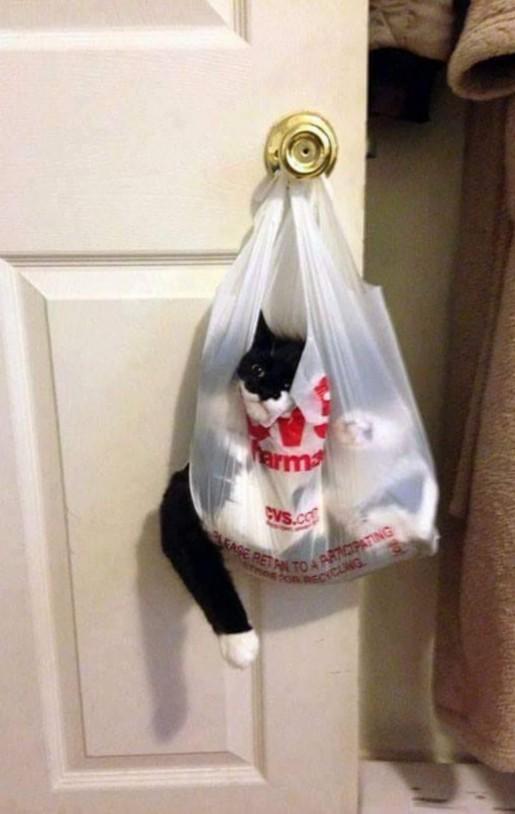 CAT BAG modified