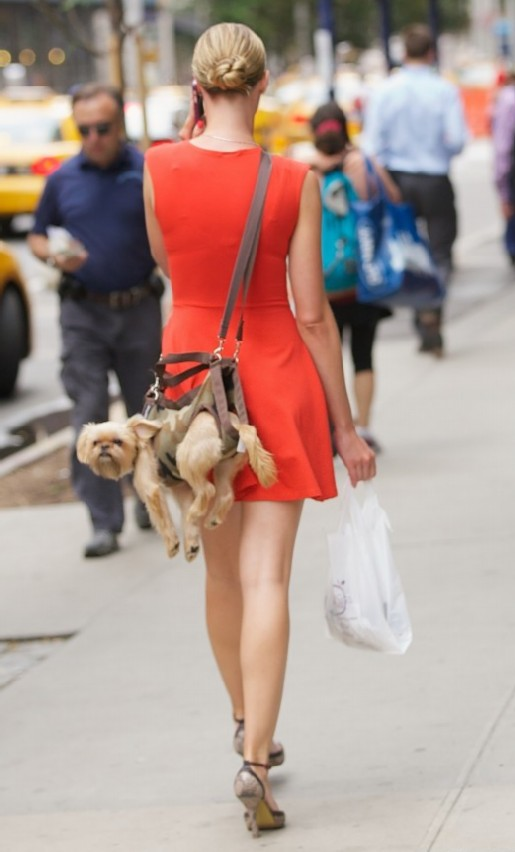 A woman is seen walking in Manhattan with her pet dog harnessed to her back in a 'pooch pouch'. Where: New York City, NY, United States When: 14 Aug 2013 Credit: Alberto Reyes/WENN.com