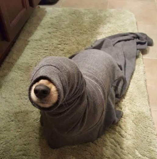 SWEATER DOG modified