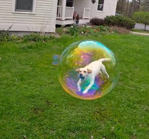 bubble modified