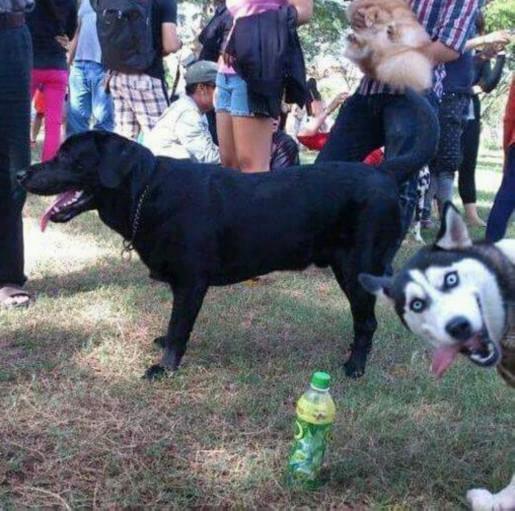 FUNNY DOG modified