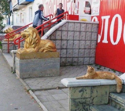 CATS modified
