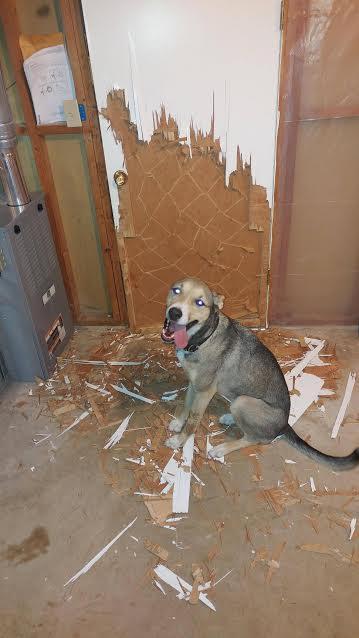 DOG DOOR. \\u201c & Turner Door Oy \u0026 Vesan Tarkkojen Käsien Ja 29 Vuoden Kokemuksen ... Pezcame.Com