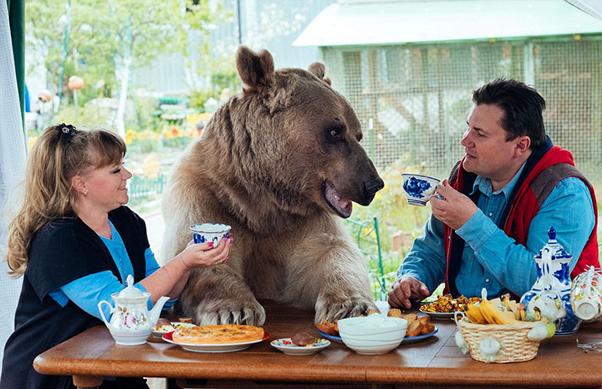 bear-tea