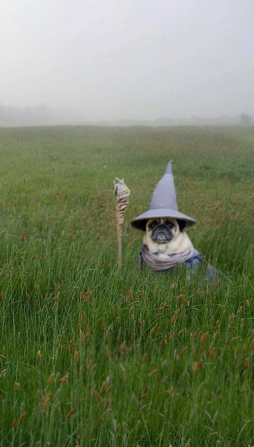 dog-field-modified