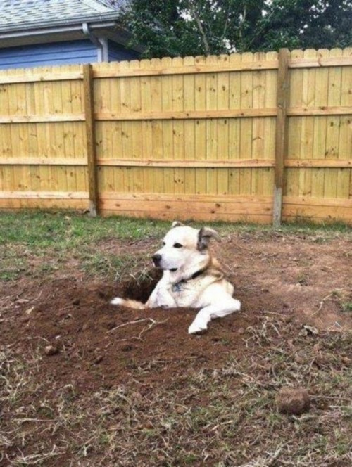dog-hole-modified