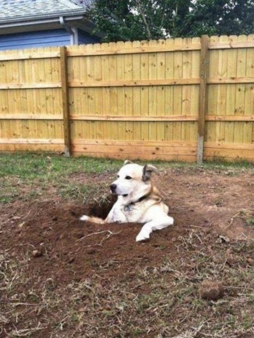 dog-hole-modified