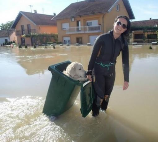 dog-pail-modified