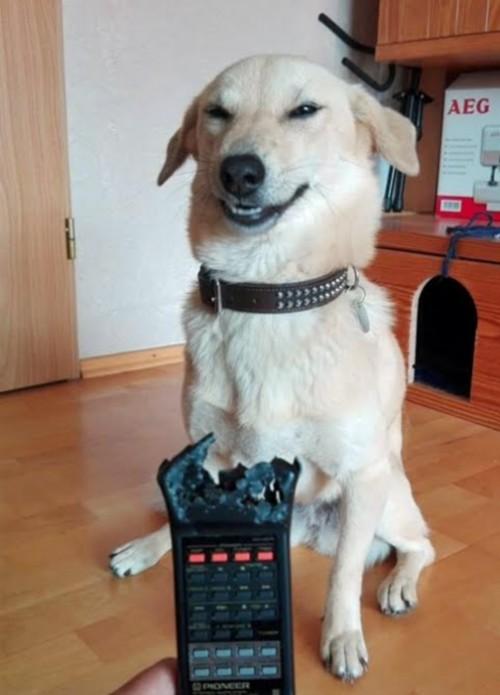 evil-dog-modified