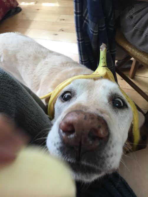 banana-head