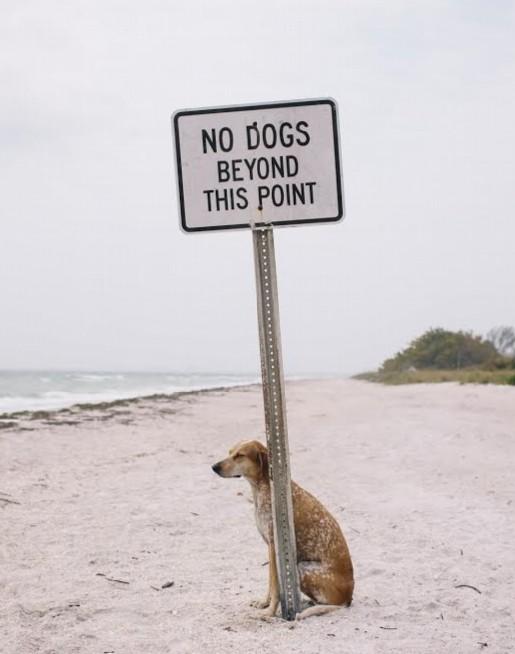 no-dogs-modified