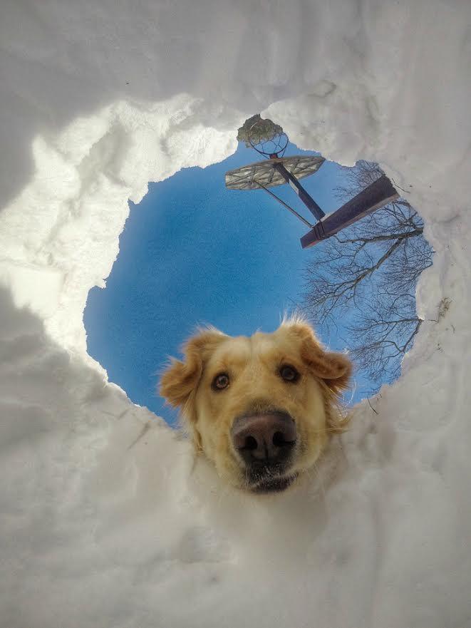 dog-hole