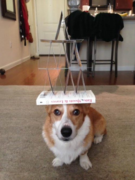 dog-balance-modified