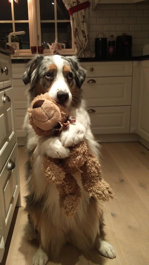 dog-toy